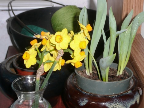 Feb5 you know its spring 002