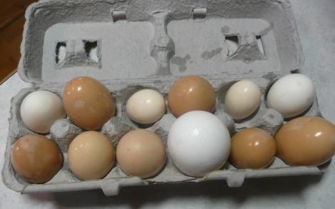 Mar 9 13 eggs 004