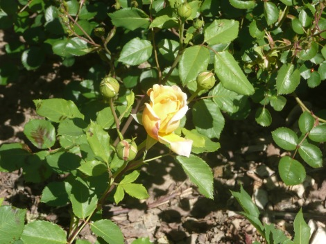 April 14 flowers 003