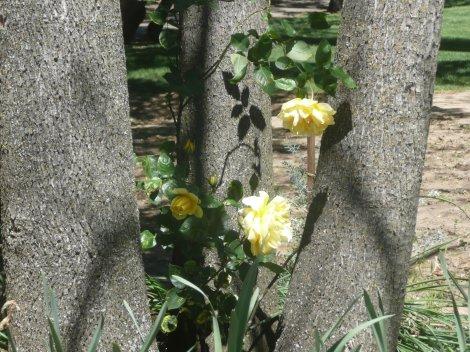 April 14 flowers 008