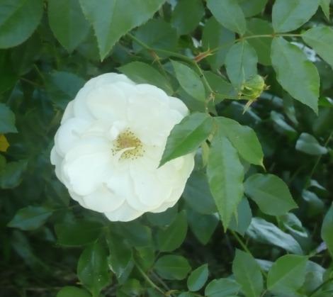 April 14 flowers 011
