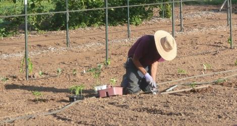 April 22 - planting 007