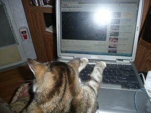 cats and compter 001