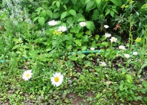 May 6 garden velma 015