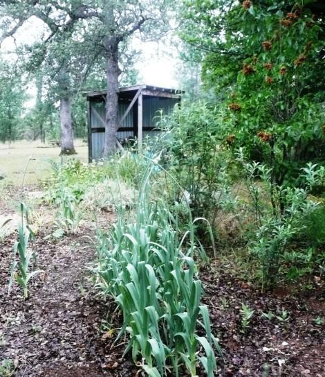 May 6 garden velma 026