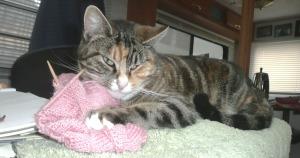 whose knitting jan13