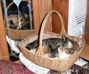 griz in basket 001 (1)
