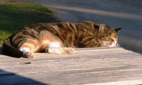 oct  19 nap in the sun
