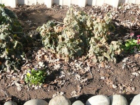 dec 9 frost, end of garden 005