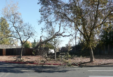 nov 22 fallen tree 001