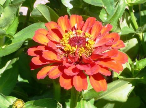 july 24 flowers 009