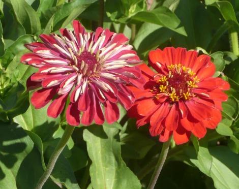 july 24 flowers 010