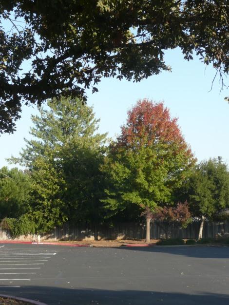 nove trees 002