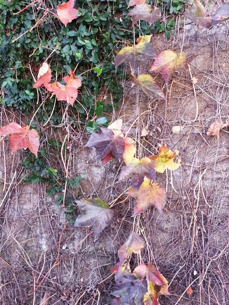 Dec 6 leaves