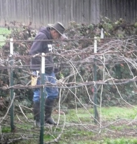 Jan 22 a time for pruning