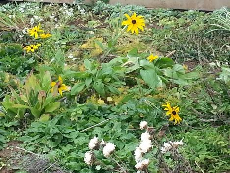 per frost flowers