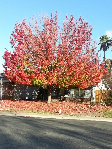 marlyn-tree