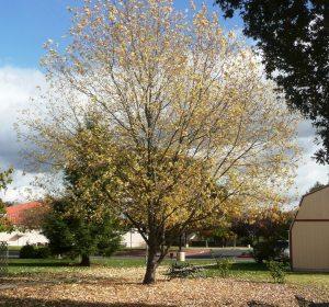 tree-nove-18